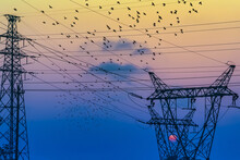 Sunset With Birds