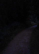 Soft Focus Lonely Dirt Curved Trail In Park Outdoor Zone With Plants And Bushes At Dark Night Time Dangerous
