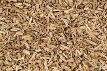 Oak Chips Sawdust Texture. Small Wood Chips For Smoking. Sawdust Background. Ecological Fuel