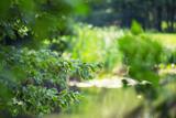 Fototapeta Fototapety do łazienki - Drzewa w parku