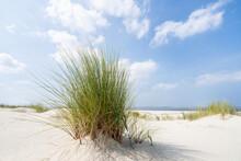 European Beachgrass On The Dune Beach