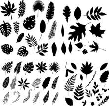 Siluetas De Hojas, Hojas En Contorno, Iconos De Hojas, Símbolos De Hojas, Plantas De Muchos Tipos, Hojas De Muchos Tipos, Ramas, Arboles