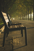 Vertical Shot Of A Wooden Bench Under The Trees Captured In Asan, South Korea