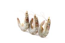 Close Up Fresh Shrimp Isolated On White Background