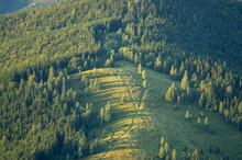 Mountain Meadow In The Woods In The Ukrainian Carpathians In Summer