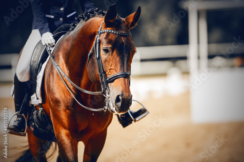 Equestrian sport. Dressage of horses in the arena.