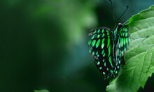 FHD WALLPAPER  BUTTERFLY ON THE LEAF