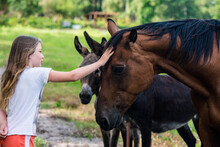 Pretty Little Girl Feeding Horses And Donkeys In Pasture