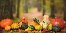 Ripe Different Pumpkins On The Background Of The Autumn Forest, The Idea Of An Autumn Background, Texture, Panorama