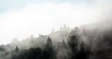 Fototapeta Na sufit - Krajobraz leśny wierzchołki drzew las we mgle