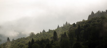 Las Wierzchołki Drzew Z Dalekiej Perspektywy