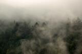 Fototapeta Na sufit - Krajobraz leśny wierzchołki drzew las we mgle panorama