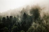 Fototapeta Na ścianę - Krajobraz leśny wierzchołki drzew las we mgle panorama