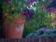 Leinwandbild Motiv English Autumn Garden