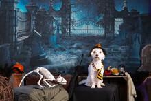 Coton De Tulear In A Halloween Night Scene