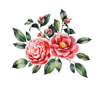 A Composition Of Watercolor Camellia Flowers. Watercolor Botanical Illustration. Postcard, Wedding Invitation.
