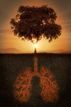 Tree Of Life, Conceptual Illustration