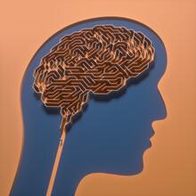 Human Brain, Conceptual Illustration