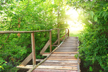 Wooden Bridge In Green Foliage To Sun