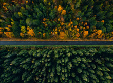 Aerial View Of A Road Through The Forest In Summer And Fall Or Autumn.
