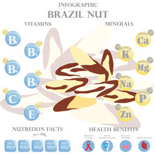 Health Benefits And Nutrition Facts Of Brazil Nuts Infographic Vector Illustration.