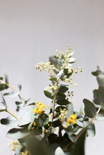 Vertical Shot Of A Wattle With Yellow Flowers