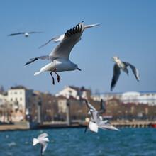Image Of Seabirds. Image Of Seagulls.