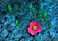 Spring Over Biofilm