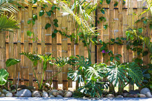 Tropical Garden With Trees And Bamboo