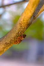 Cicada On A Tree With Bokeh And Saturated Colors
