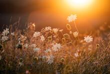 Wild Meadow In Sunset Sunlight Background. Summer Field Background