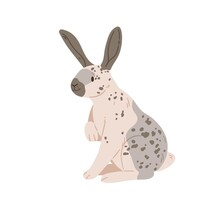 English Checkered Breed Of Giant Rabbit With Spots On Fur. Spotty Bunny Sitting. Cute Domestic Animal. Coney Pet With Black Long Ears. Flat Vector Illustration Isolated On White Background