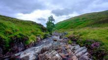 Highland Stream, Waterfall And Tree In Afternoon Light On The Allt Bail' A'mhuilinn, Ben Lawers Near Glen Lyon, Scotland