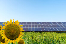 Solar Panels On A Solar Farm And Sunflowers Under A Blue Sky In A Backyard Of Vegetable Garden. Solar Power Plant, An Ecological Alternative Source Of Electricity, Front View
