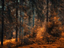 Autumn Colors In The Forest. Yellow Coniferous Forests In The Morning. Atmospheric Landscape For Background.