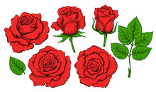 Colored Hand Drawing Set Of Roses. Engraving Elements Of Rose Flowers. Vector Illustration Isolated On The White Background