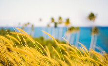 Blurred Image Of Native Grasses And Palm Trees Blowing On A Tropical Island