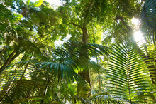 Looking Up Through Rainforest Towards Canopy And Sun Filtering Through Trees