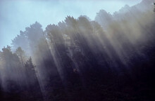 Sunrays Streaming Through Tall Trees And Native Bushland