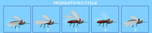 Mosquito Frame By Frame Loopable Vector File Ready For 2D Animation, The Editable Illustration Source File For Motion Graphics, Infographics, Animated Video, Explanatory, With A Plain Blue Background