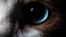Olho Azul De Gato De Muito Perto