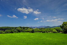 Green Rice Fields Moved By The Wind With Blue Sky