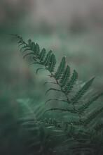 Blatt, Grün, Natur, Pflanze, Baum, Verzweigt, Wald, Gärten, Gras, Textur, Flora, Hintergrund, Frisch, Farnkraut, Makro, Tropisch, Natürlich, Frühling, Sommer, Park, Laubwerk, Abenteuer, Reisen, Jungel