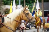 Fototapeta Młodzieżowe - Close-up of Horse being ridden during parade