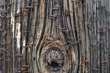 Wooden Pole With Rusty Staples