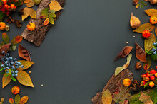Autumnal-winter Composition With Dried Leaves, Pumpkins, Bark Of Trees And Berries On Dark Background. Frame Of Plants. Flat Lay, Copy Space.