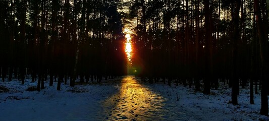 Zachód słońca w zime,widok z lasu