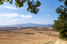 Gladiator Road And Cypress Pienza Tuscany
