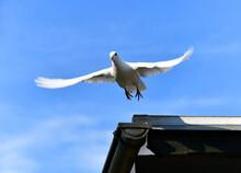 Tauben Auf Einem Taubenschlag