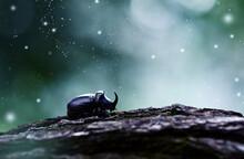 A Rhinoceros Beetle In The Rays Of Moonlight. Night Atmosphere